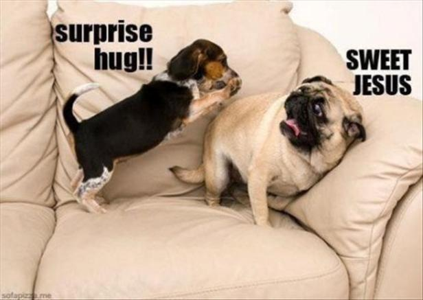 funny-dogs-surprise-hugs